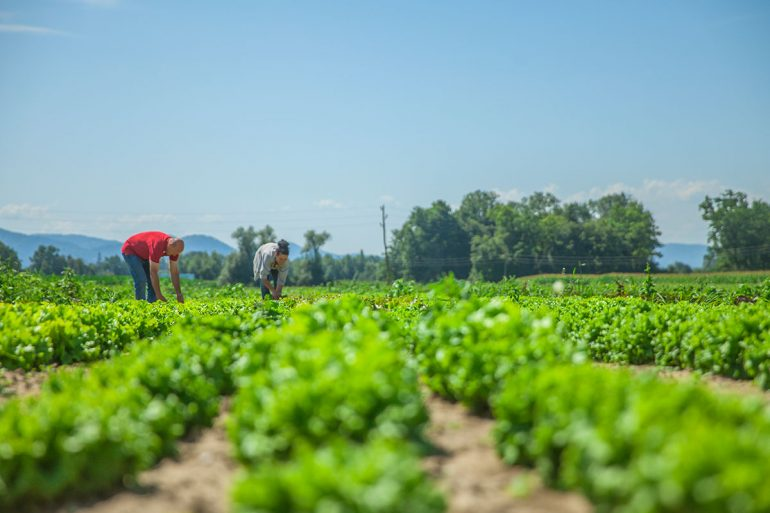 Instalar placas solares para regar, en agricultura